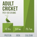 cricket as food facts